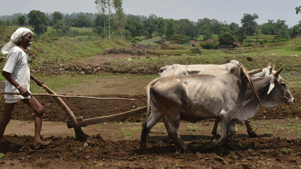 West Singhbhum farmers wary of Jharkhand government's agriculture incentive scheme